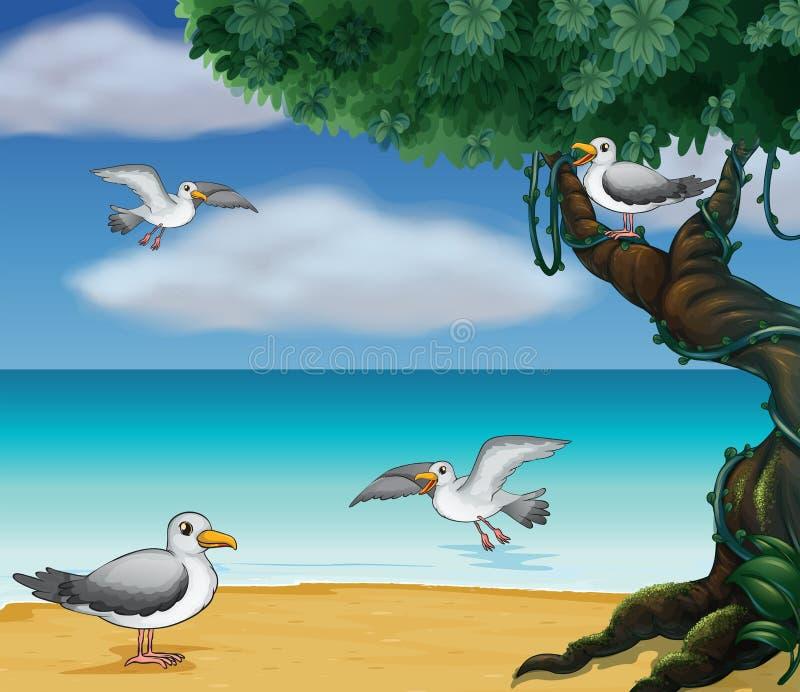 Ptaki przy seashore ilustracja wektor