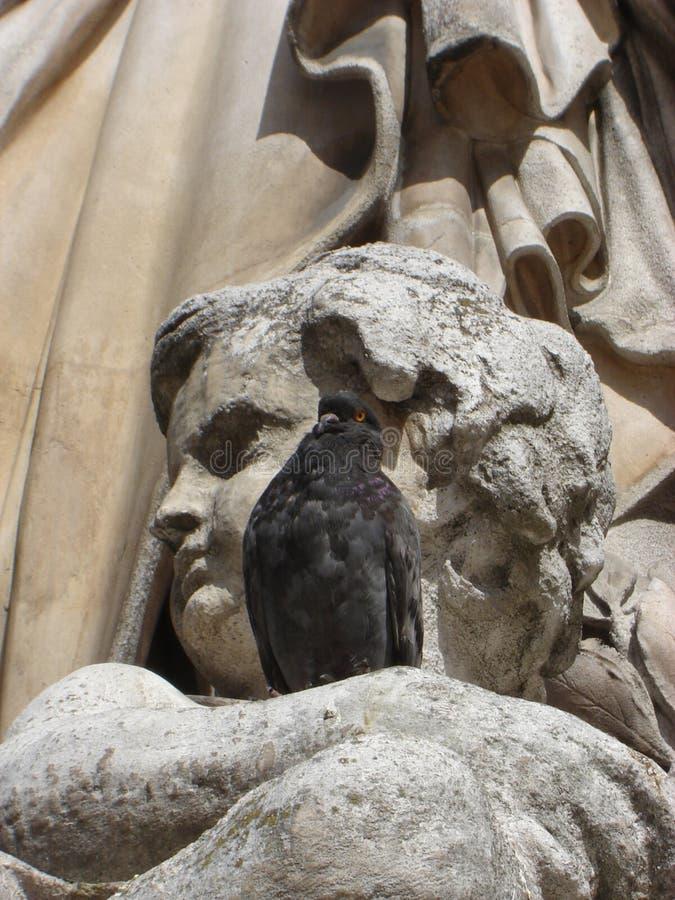 Ptaki przy Uroczystą operą zdjęcia stock