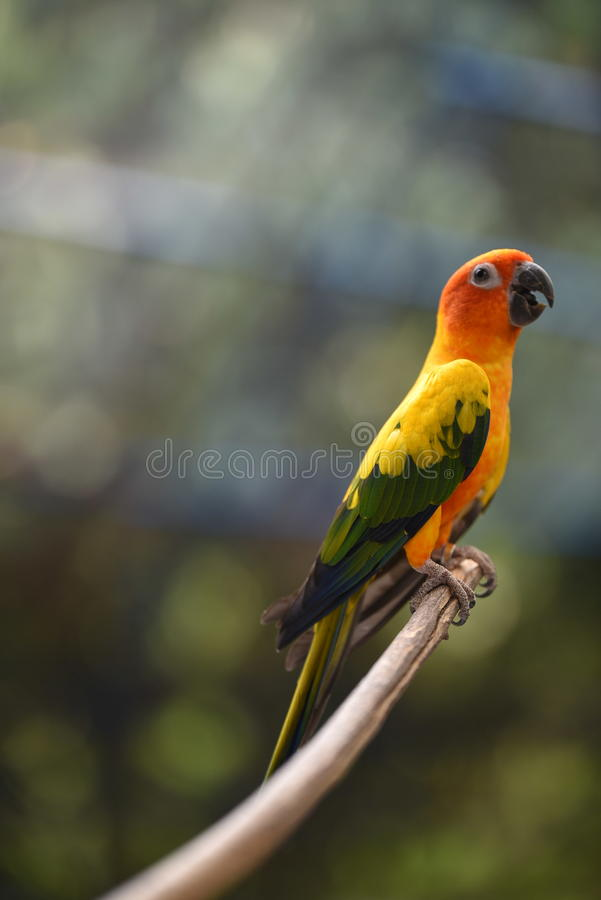 Ptaki są wyspy pięknym drewnianym czekaniem jeść zdjęcie stock