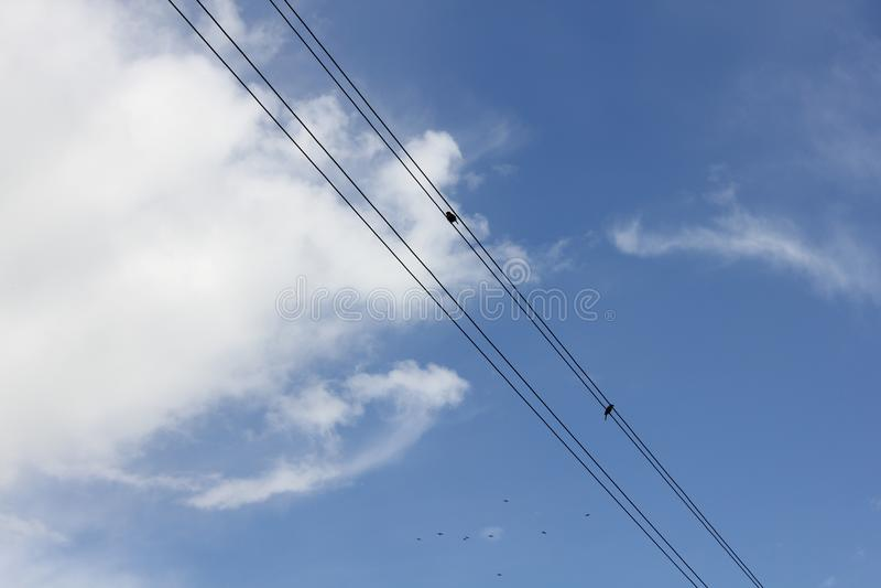Ptaki siedzą na elektrycznych drutach 30739 obrazy stock