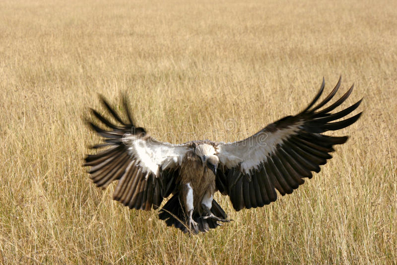Ptaki Tanzania fotografia royalty free