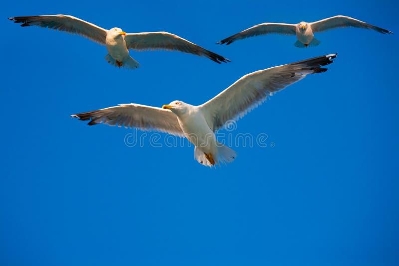 ptaki target314_1_ niebo obraz stock