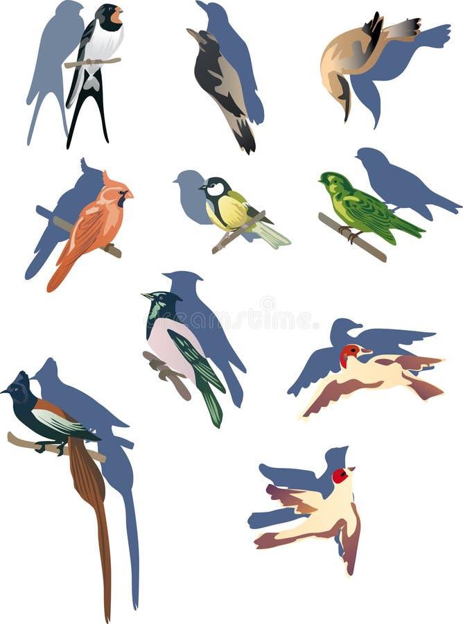 ptaki ustawiają małego ilustracja wektor