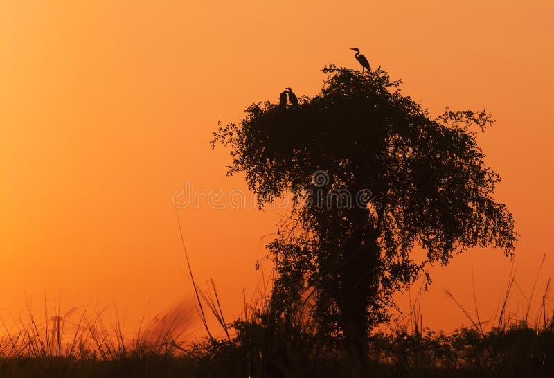 ptaki ustawiający słońce obrazy stock