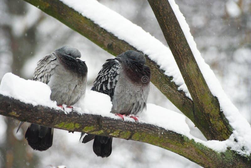Ptaki w śniegu obraz stock