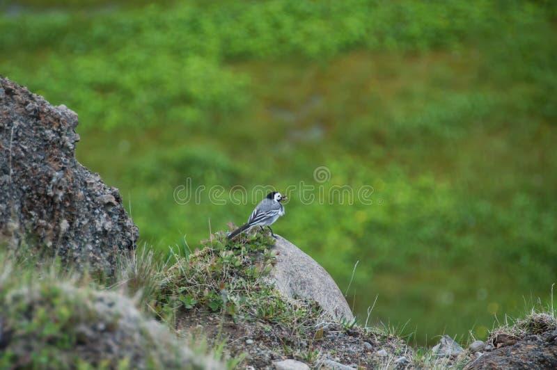 Ptaki w ich naturalnym siedlisku zdjęcie stock