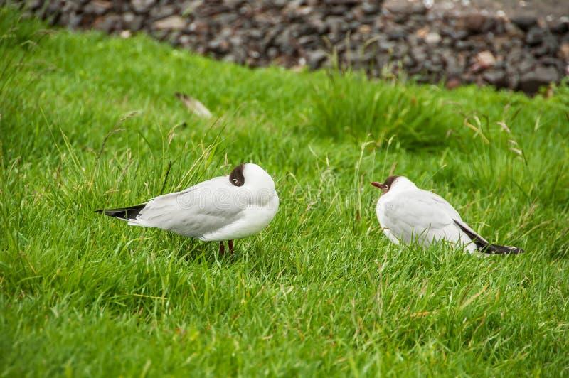 Ptaki w ich naturalnym siedlisku obraz royalty free