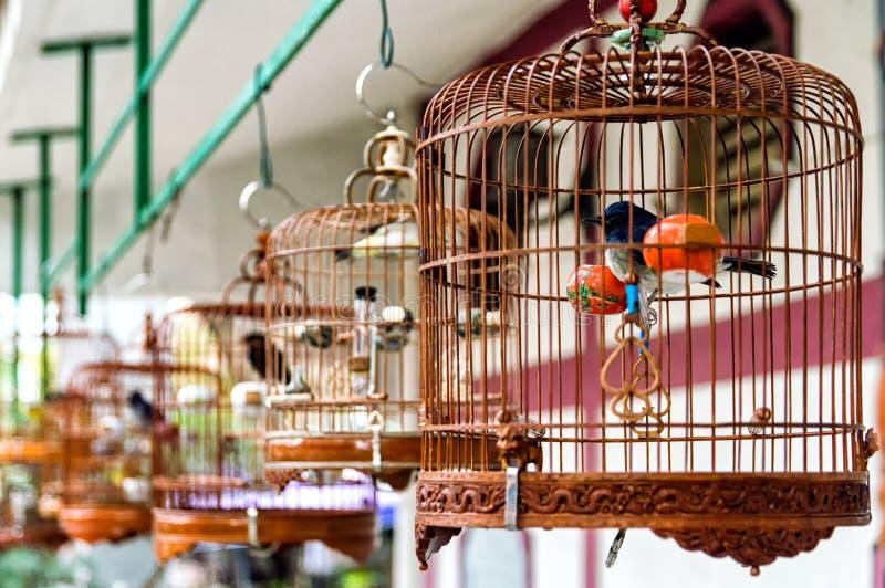 Ptaki w klatkach zdjęcie royalty free
