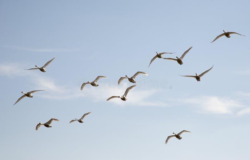 Ptaki W locie obraz stock