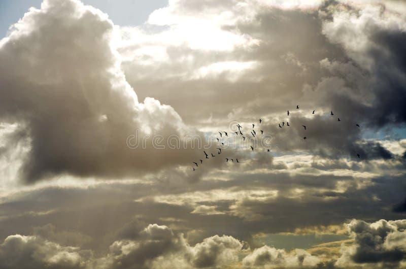 Ptaki w locie przez nadziemskich chmur obraz stock