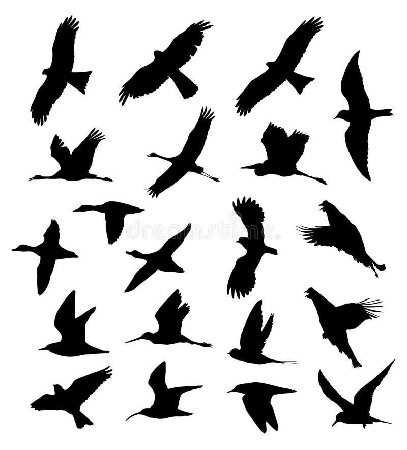Ptaki w lot ustalonych sylwetkach wektorowych ilustracji