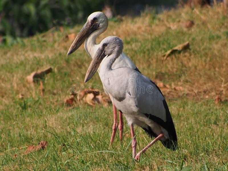 Ptaki w parku, Bangkok, Tajlandia zdjęcia stock