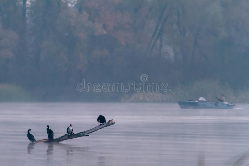 Ptaki w połowie i mgle obrazy stock