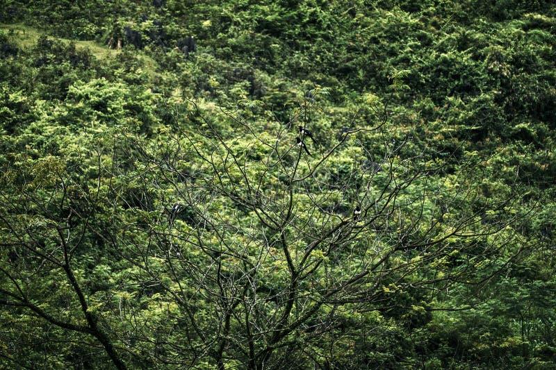 Ptaki w słońca świetle fotografia stock