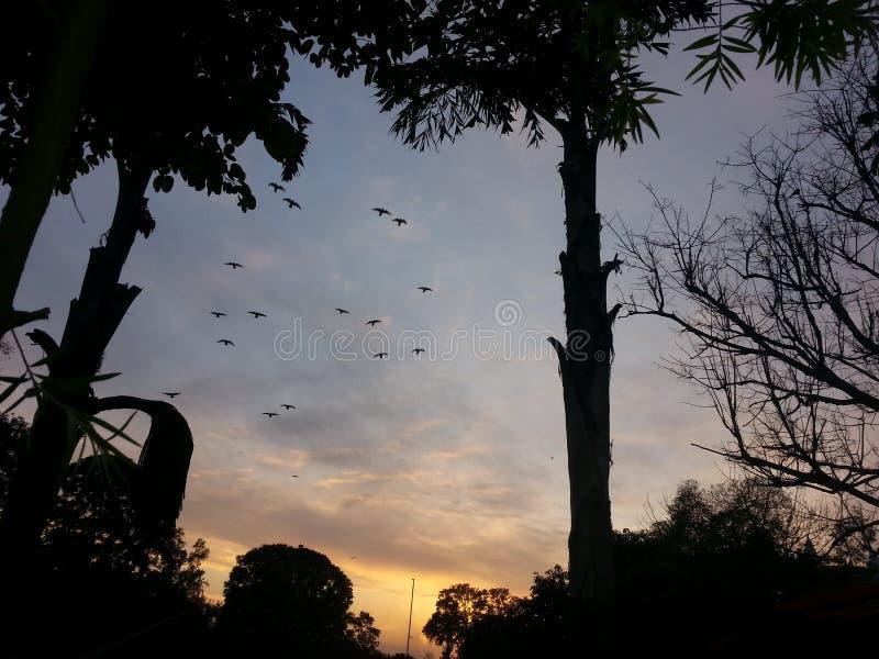 Ptaki w zmierzchu zdjęcia royalty free