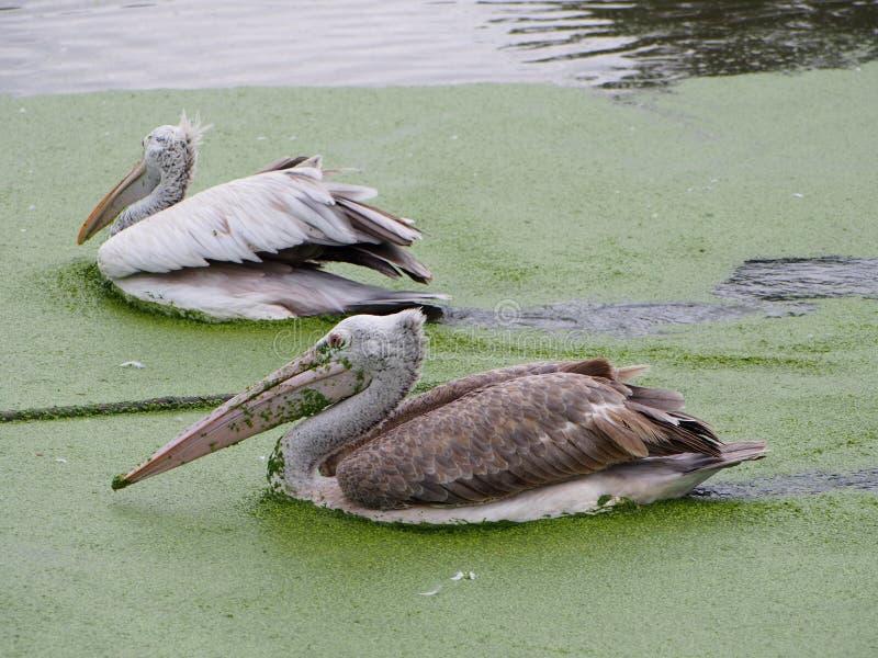 Ptaki w zoo, Bangkok, Tajlandia fotografia stock