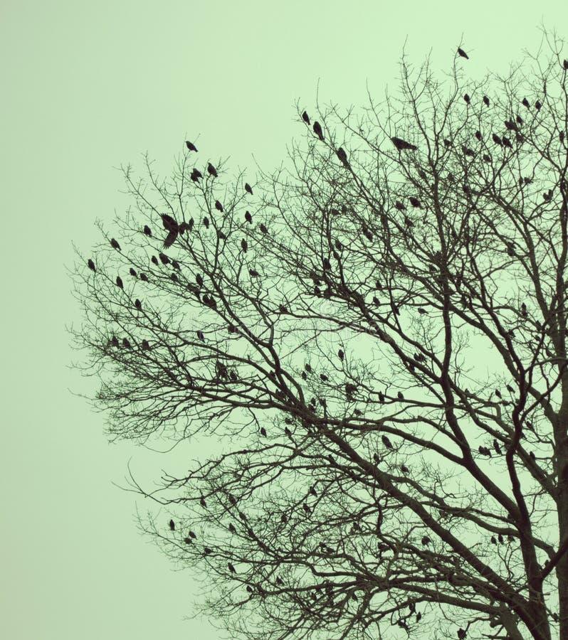 Ptaki zima zdjęcia stock