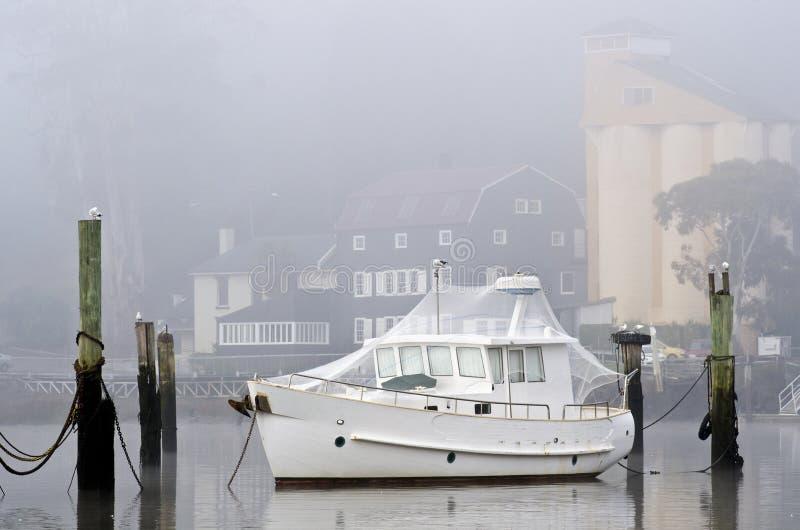 ptasi łódkowaty Launceston siatkarstwa Tasmania biel zdjęcie royalty free