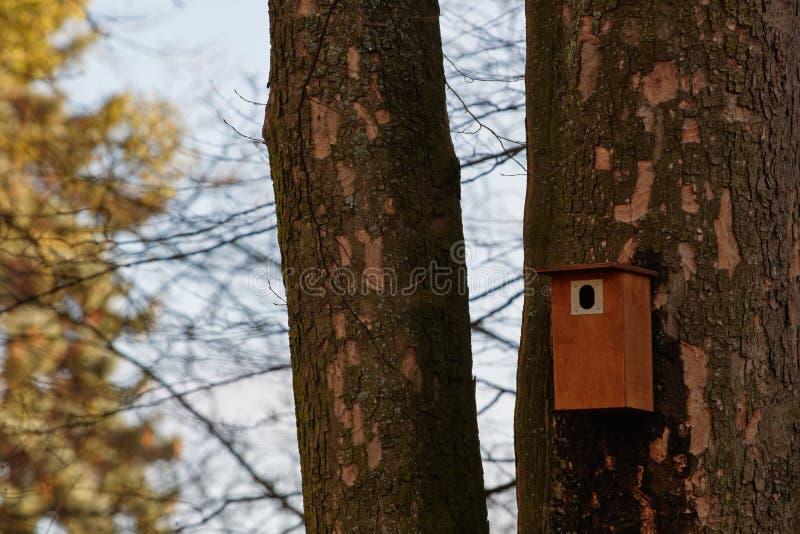 Ptasi budka wieszający na drzewie Wiosna dom dla ptaków zdjęcia stock