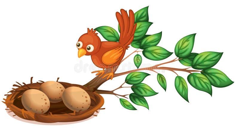 Ptasi dopatrywanie jajka ilustracja wektor