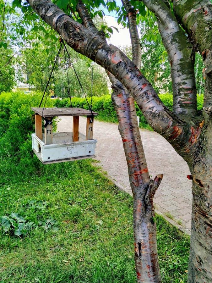 Ptasi dozowników ważenia na wielkim drzewie w parku Pogodny letni dzień, zielonych rośliien kwiat obraz royalty free