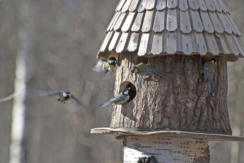 Ptasi dozownik i pięć ptaków fotografia royalty free