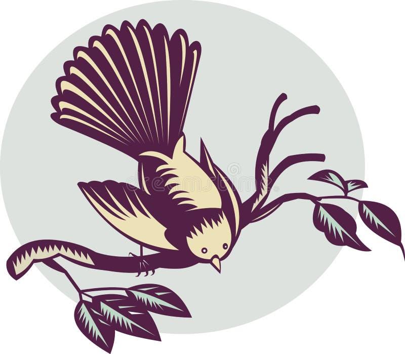 ptasi fantail nowy Zealand ilustracji