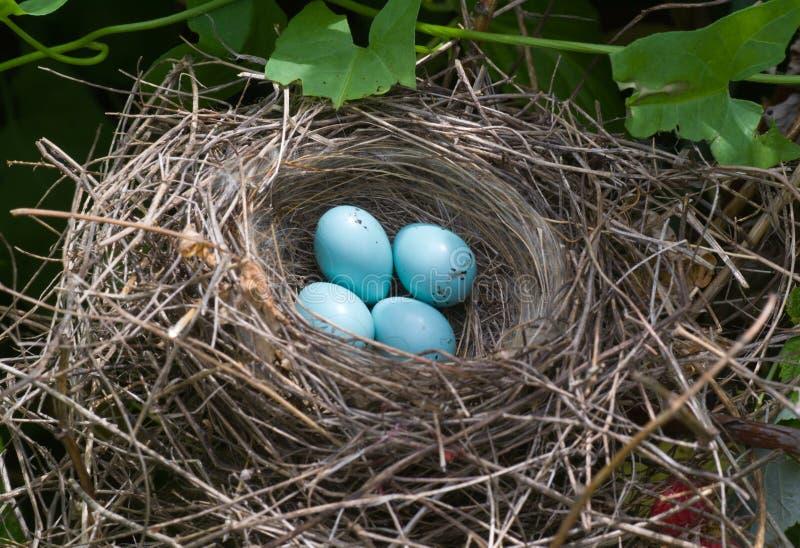 Ptasi jajka obrazy stock