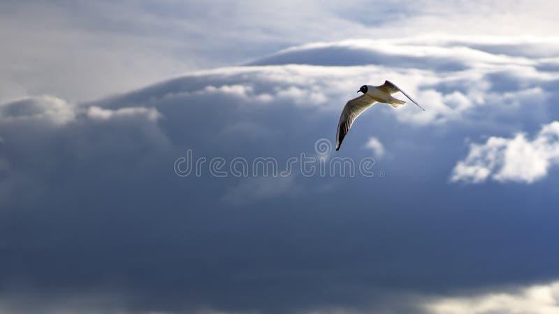 Ptasi latanie i patrzeć w dół gotowy nurkować zdjęcia royalty free