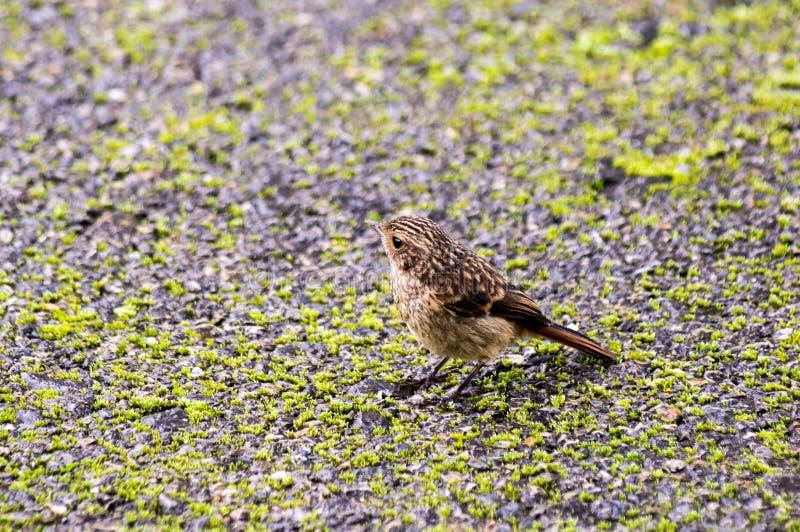 ptasi mały fotografia royalty free