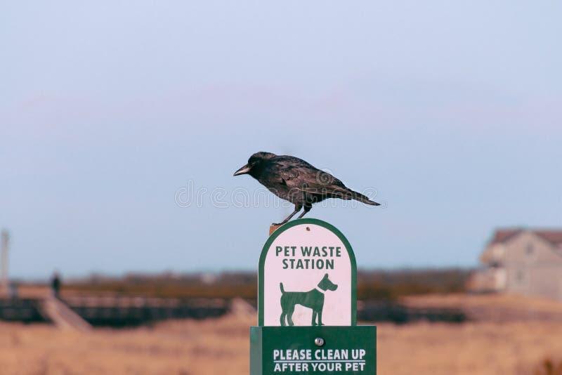 Ptasi obsiadanie na znaku fotografia stock