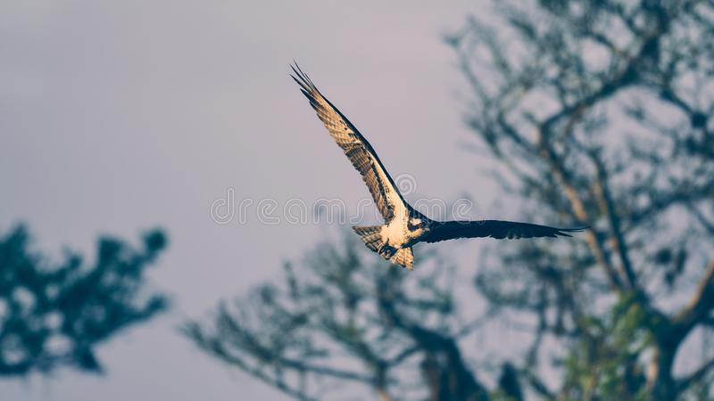 Ptasi podesłanie swój skrzydła fotografia royalty free