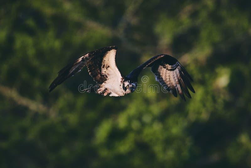 Ptasi podesłanie swój skrzydła obraz stock