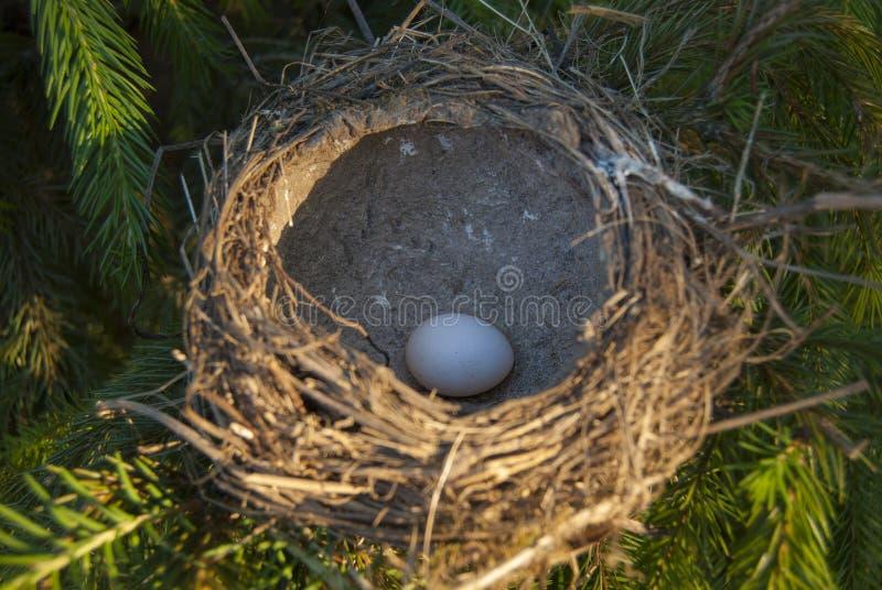 Ptasi ` s gniazdeczko, zalewający z światłem słonecznym, z jajkiem inside obraz stock