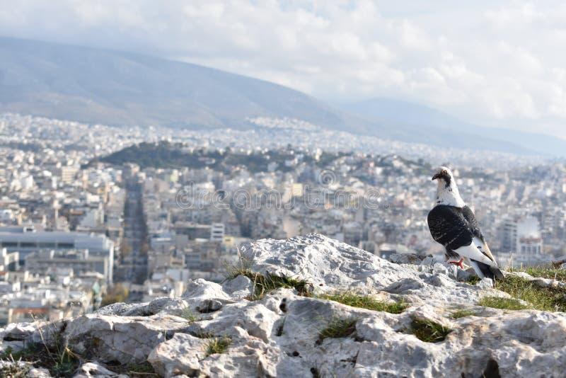 Ptasi ` s oka widok Ateny zdjęcie stock