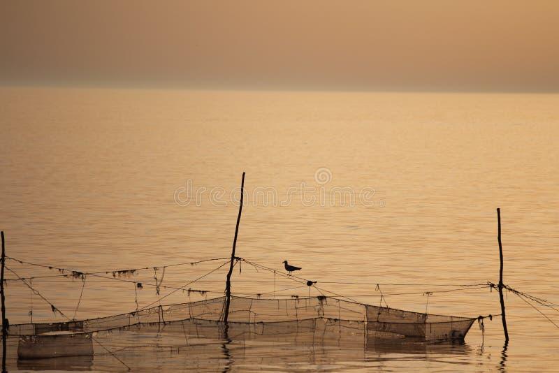 Ptasi Seagull odpoczywa na sieciach obraz stock
