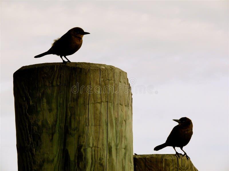 Ptasi trajkotanie fotografia stock