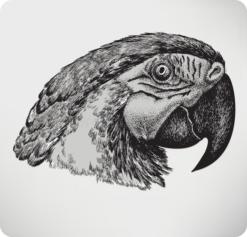 Ptasia papuga, ręka rysunek, wektorowa ilustracja.