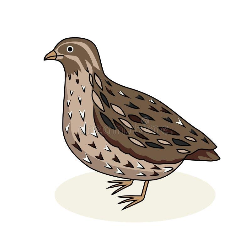 Ptasia przepiórka Popielaty ptak Kreskówka styl royalty ilustracja