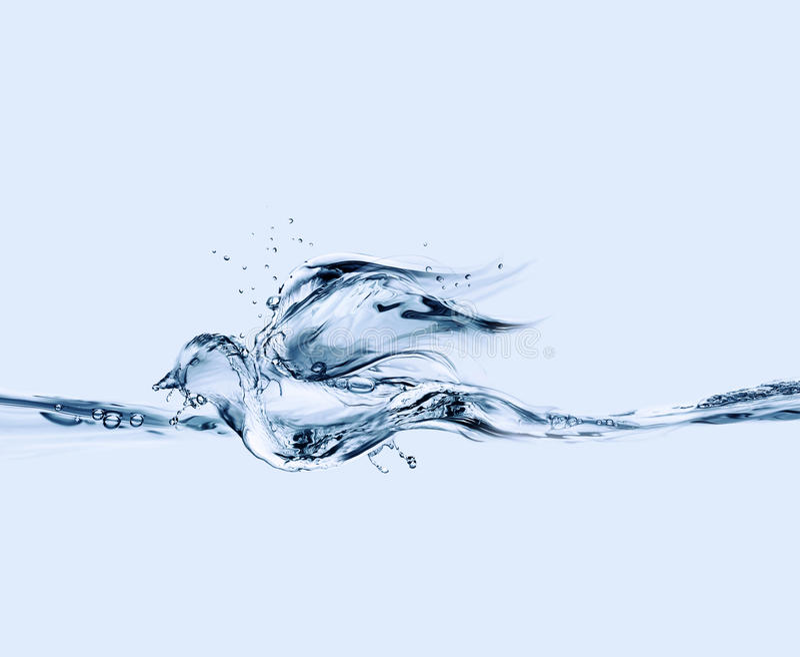 Download Ptasia spławowa woda obraz stock. Obraz złożonej z kitny - 16120799