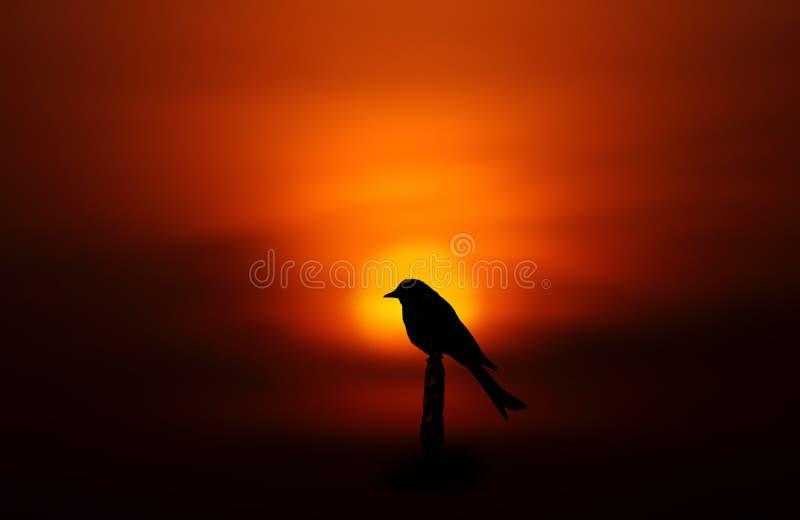 Ptasia sylwetka obraz stock