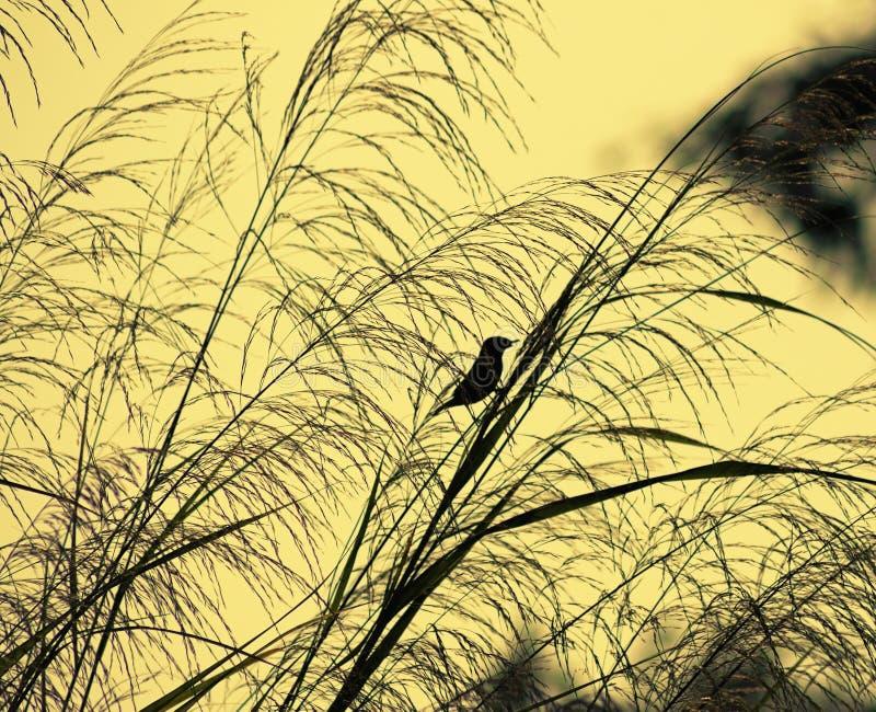 ptasia trawy. zdjęcia stock