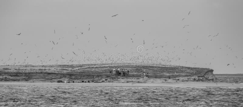 Ptasia wyspa Gniazduje punkt fotografia stock