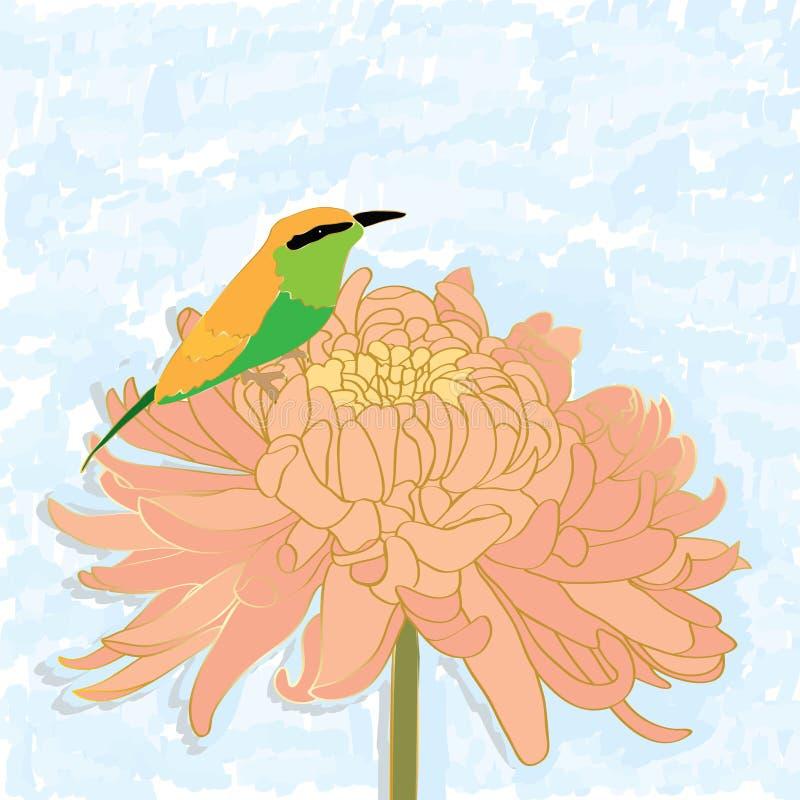 Ptasia zjadacz chryzantema samotnie ilustracji
