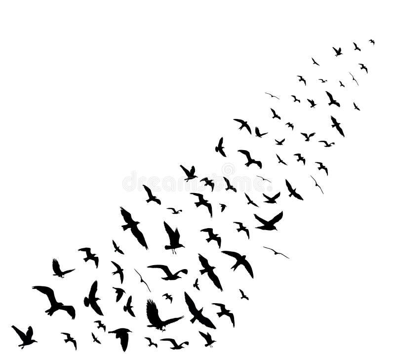 Ptasie klin sylwetki na białym tle ilustracji
