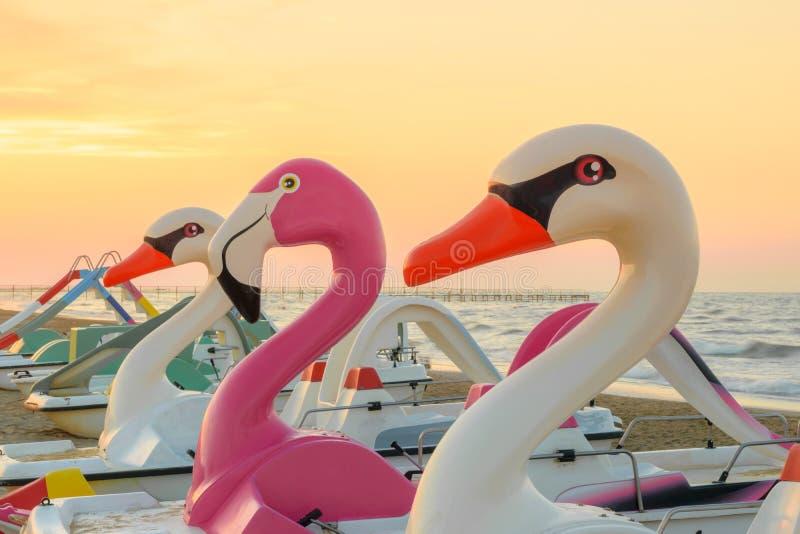 Ptasie kształt wody paddle łodzie na plaży obraz royalty free