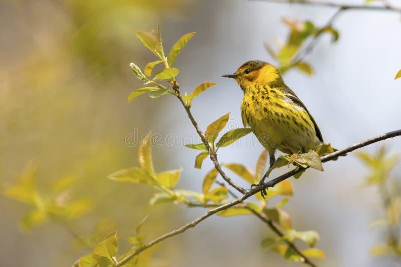 Ptasiego dopatrywania natury tło zdjęcia stock