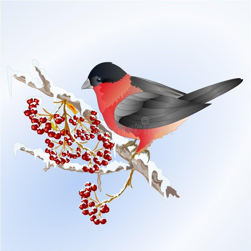 Ptasiego gila mały songbirdon dalej na śnieżny drzewa i jagody zimy tła rocznika wektorowy ilustracyjny editable ilustracja wektor