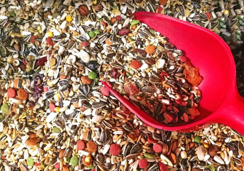 Ptasiego jedzenia mieszanka z czerwoną łopatą obrazy royalty free