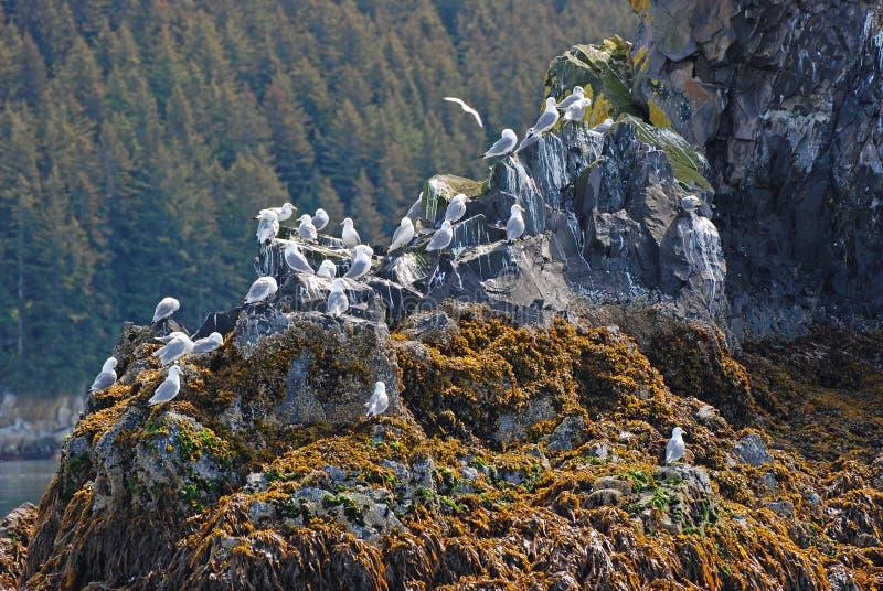 ptasiej wyspy kodiak blisko fotografia stock